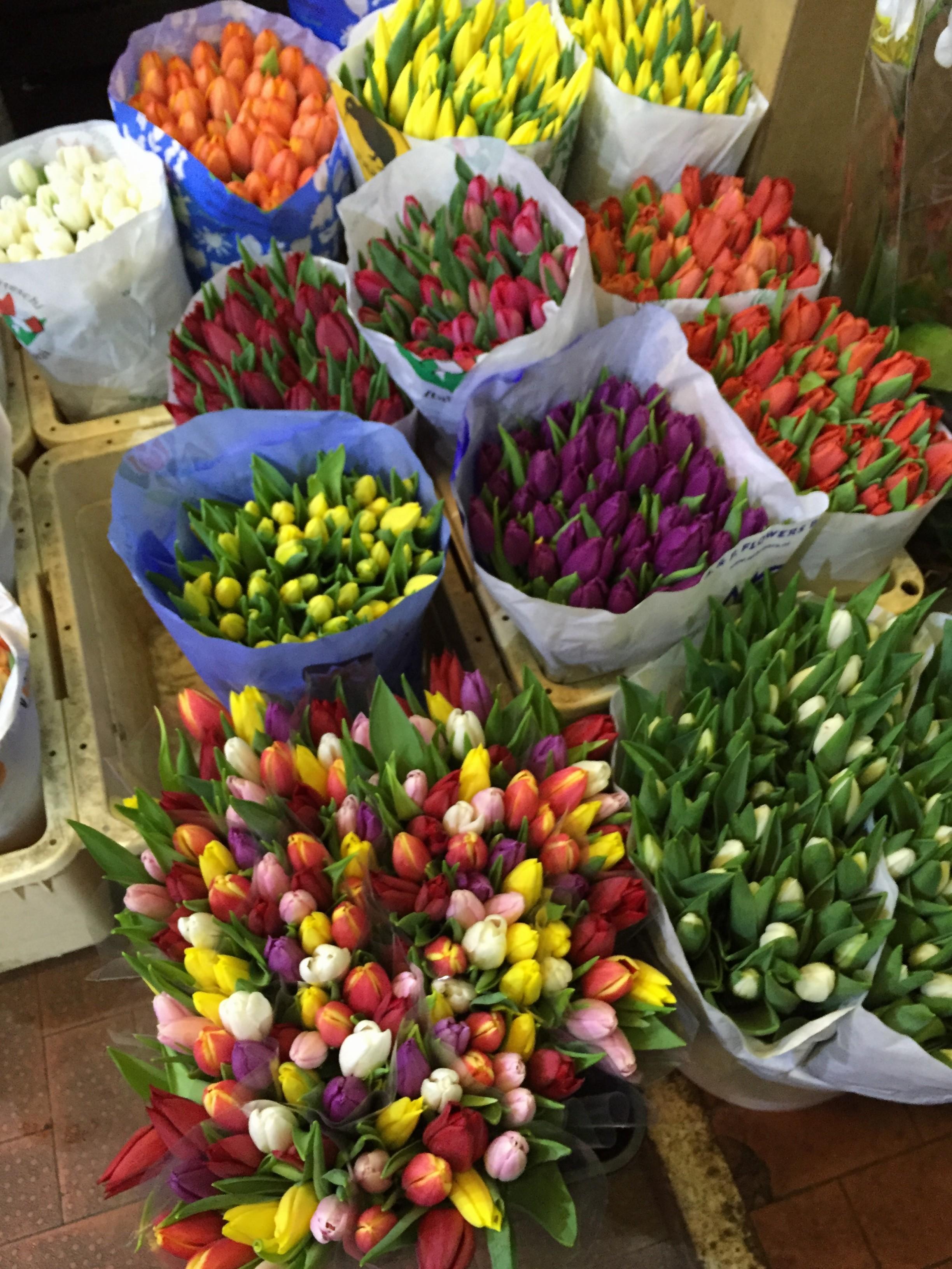 Ingrosso fiori roma il mercato all ingrosso dei fiori di roma for Piante artificiali economiche