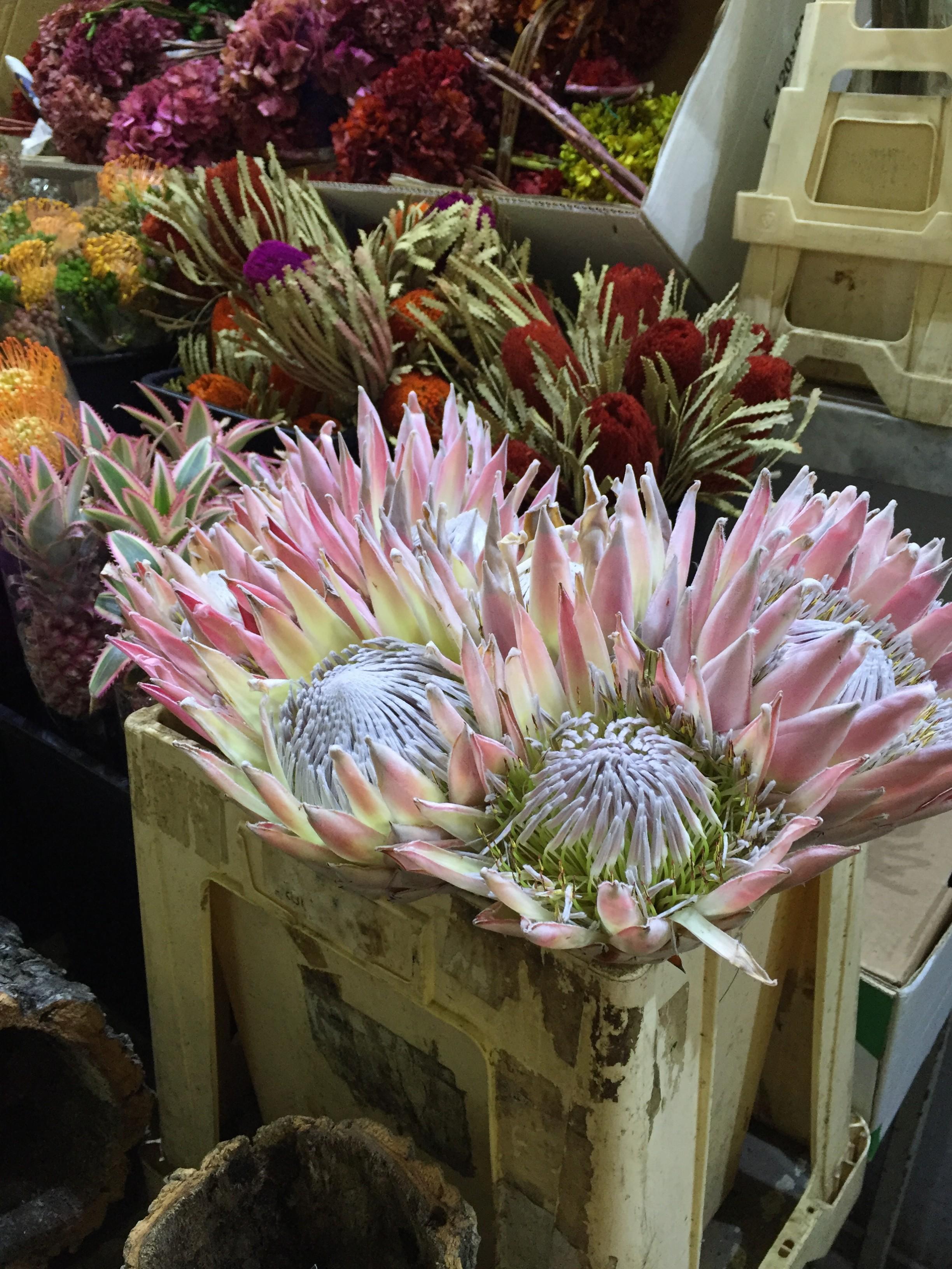 Ingrosso fiori roma come avviare un negozio di fiori for Piante artificiali economiche