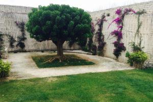 matrimonio a favignana sofia gangi giardino-eritrina
